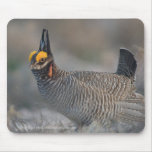 Lesser Prairie Chicken Mousepad