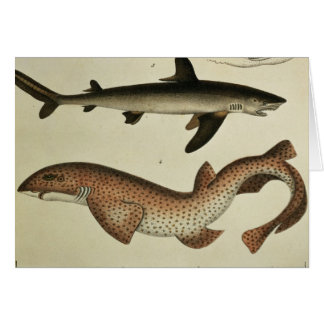 Lesser Spotted Dogfish Card
