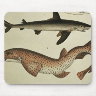 Lesser Spotted Dogfish Mouse Mat