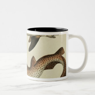 Lesser Spotted Dogfish Two-Tone Coffee Mug