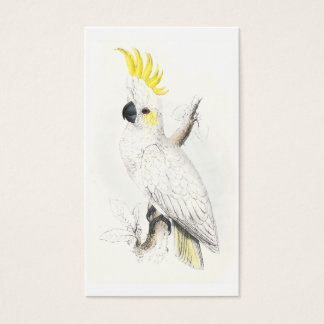Lesser Sulphur-Crested Cockatoo by Edward Lear Business Card