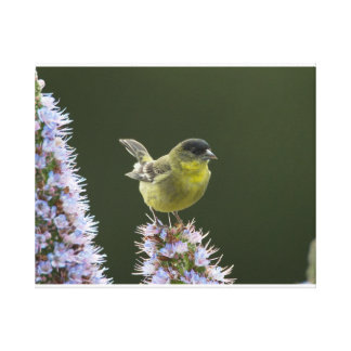Lessor Goldfinch Stretched Canvas Prints