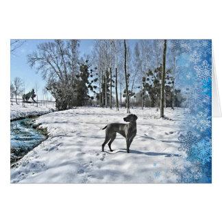 Let it Snow, Let it Snow, Let it Snow Greeting Cards