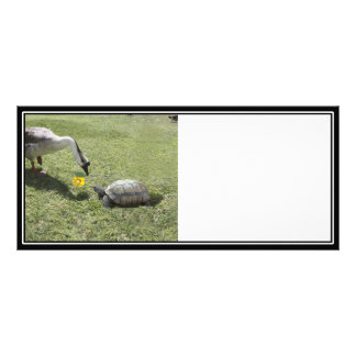 Let s Be Friends - The Turtle The Goose Rack Card Design