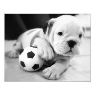 Let s Play Soccer English Bulldog Puppy Art Photo