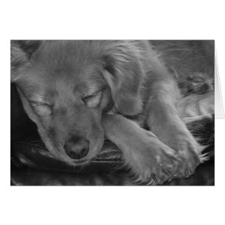 Let Sleeping Dogs Lie! Greeting Card