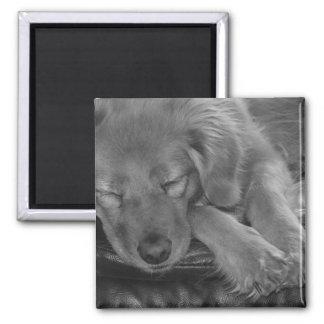 Let Sleeping Dogs Lie Magnet