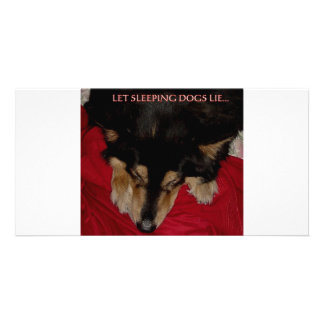 LET SLEEPING DOGS LIE PHOTO CARDS