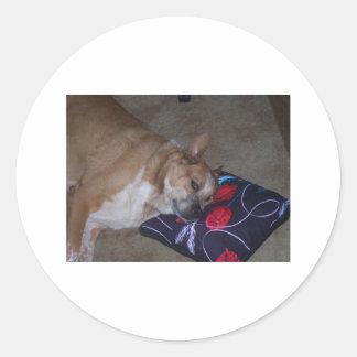 Let Sleeping Dogs Lie Round Sticker