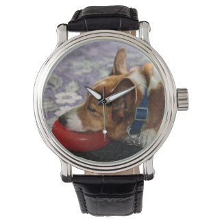 Let Sleeping Dogs Lie Watches