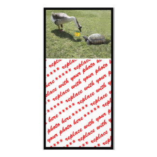 Let's Be Friends - The Turtle & The Goose Photo Greeting Card
