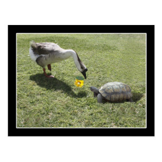 Let's Be Friends - The Turtle & The Goose Postcard