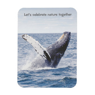 Let's Celebrate Whale Magnet