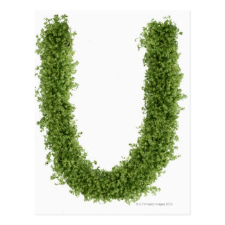 Letter U in cress on white background Post Cards