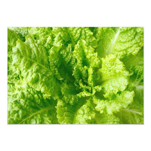 "Lettuce 5"" X 7"" Invitation Card"