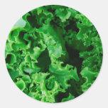 Lettuce Close Up Print - Weird Unique Gift Round Sticker