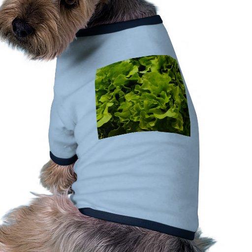 Lettuce Pet Clothes