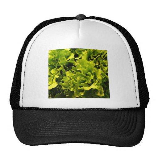 Lettuce Trucker Hat