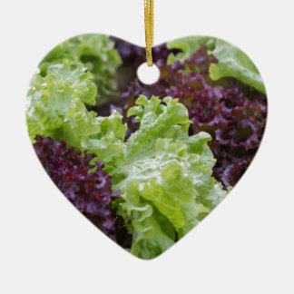 lettuce in the garden ceramic heart decoration