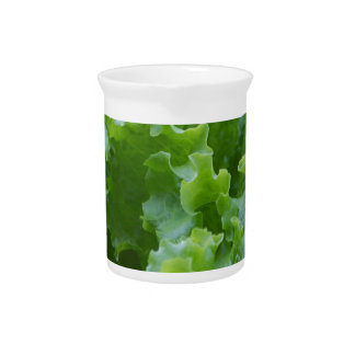 lettuce in the garden pitcher