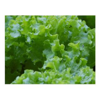 lettuce in the garden postcard