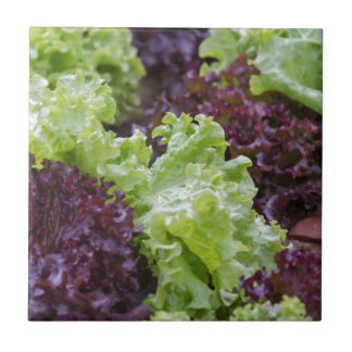 lettuce in the garden small square tile