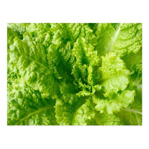 Lettuce Post Card
