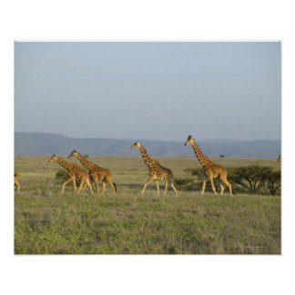 Lewa Wildlife Conservancy Kenya Poster