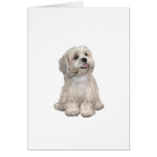 Lhasa Apso (C) - Light gold Card