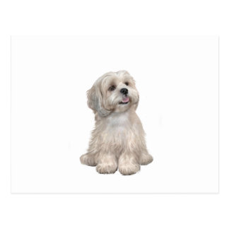 Lhasa Apso (C) - Light gold Postcard