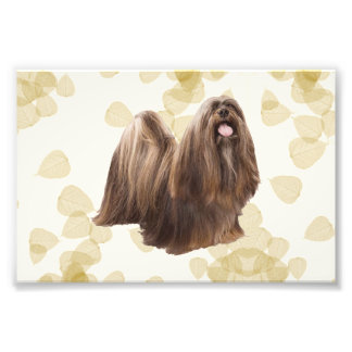 Lhasa Apso on Tan Leaves Photographic Print