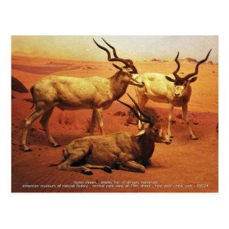 libyan desert postcard