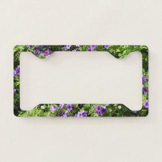 License Plate Holder--Summer Phlox Licence Plate Frame