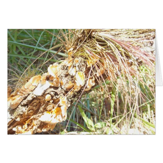 Lichen and Air Plant Matte Greeting or Note Card