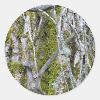 Lichen, Bark, and Branches Round Sticker