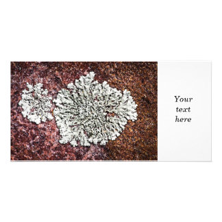Lichen growing on rock photo greeting card