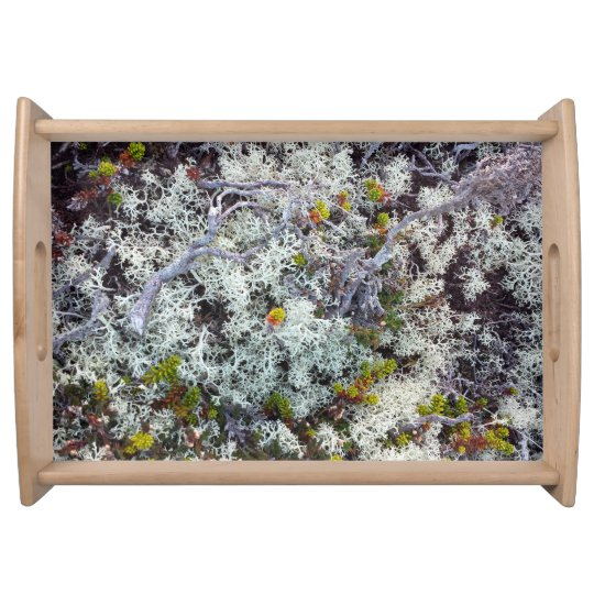 Lichen Large Serving Tray