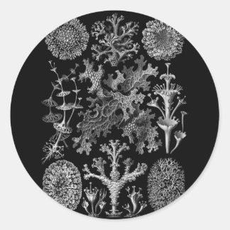 Lichens in Black and White (Lichenes) Classic Round Sticker