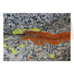 Lichens, Sequoia National Park Stationery Note Card