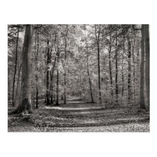 Liepnitzsee forest postcard