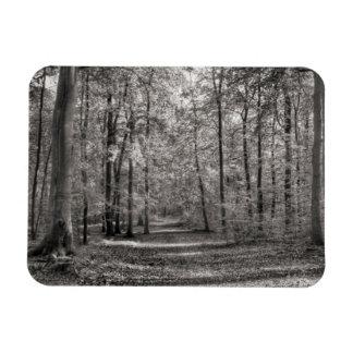 Liepnitzsee forest rectangular photo magnet