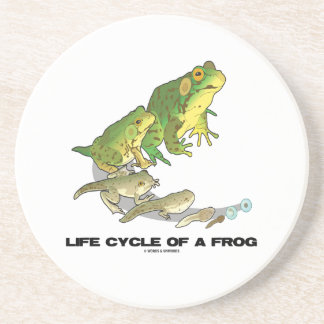 Life Cycle Of A Frog (From Egg To Tadpole To Frog) Sandstone Coaster