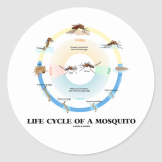 Life Cycle Of A Mosquito (Egg Larva Pupa Imago) Round Sticker