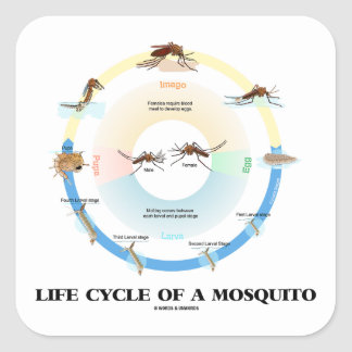 Life Cycle Of A Mosquito (Egg Larva Pupa Imago) Square Sticker