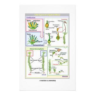 Life Cycle Of A Typical Moss Personalized Stationery