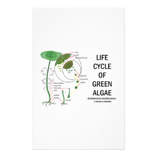 Life Cycle Of Green Algae Stationery