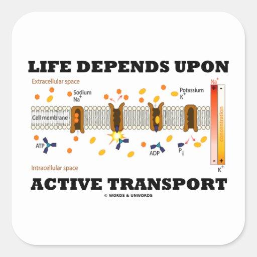 Life Depends Upon Active Transport (Na-K Pump) Square Sticker