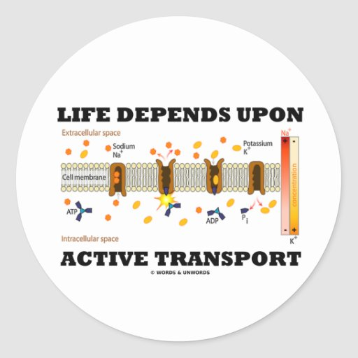 Life Depends Upon Active Transport (Na-K Pump) Round Sticker