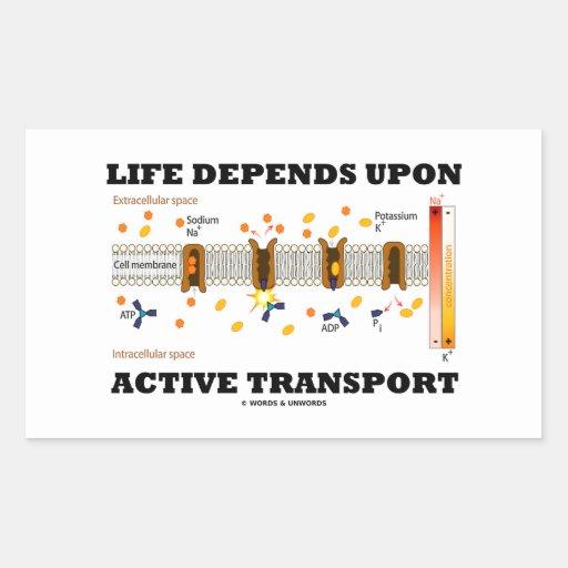 Life Depends Upon Active Transport (Na-K Pump) Rectangle Sticker