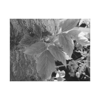 Life in black and white stretched canvas prints